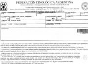 Criadero en cali (co) vende cachorros dogo argentino