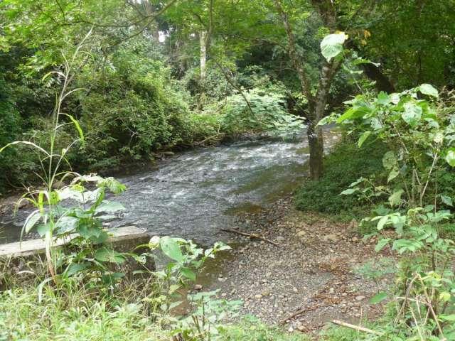 Vendo 14 hectareas san lorenzo prov chiriqui