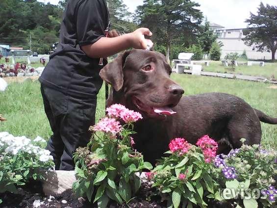 Adiestramiento canino urbano personalizado