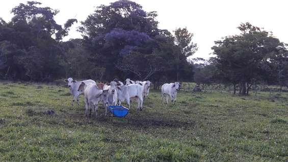Terreno, 25 hectareas, tituladas