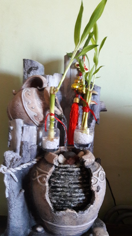 ¿ya tienes tu bambú de la surte? / do you already have your lucky bamboo?