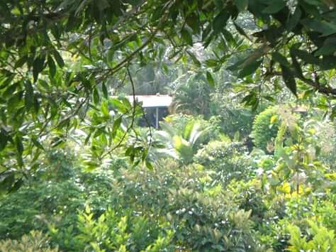 Lago gatún 8.6 hectáreas